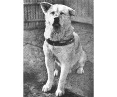 قدردانی گوگل از یک سگ! + تصاویر