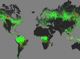 جنگلهای جهان زیر نگاه تیزبین گوگل ارث