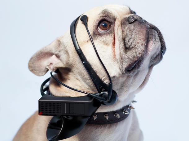 فناوری جدید برای ترجمه امواج مغزی سگها