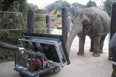 این فیل با تبلت کار میکند!