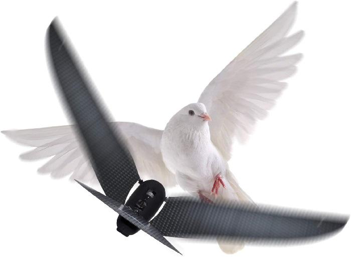 ساخت پهپاد انعطافپذیر با الهام از کبوترها