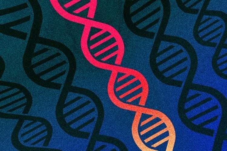 نرمافزار اکسل ژنهای انسان را تغییر میدهد